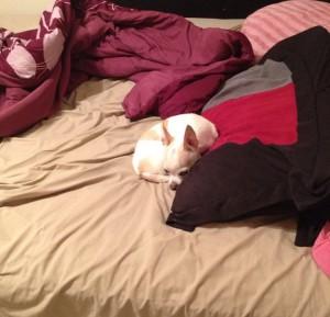 Lost Puppy 1 - 2913 Milby Oaks Drive